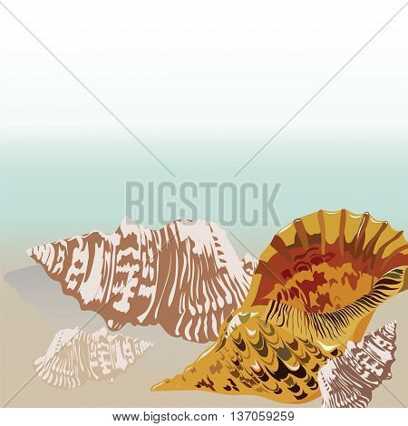 Vector sea shell hand drawn. Vintage Holiday Sea shell on beach background. Scallop shell for Greeting card or travel cards