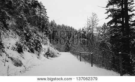 Black and white winter landscape off the beaten path.