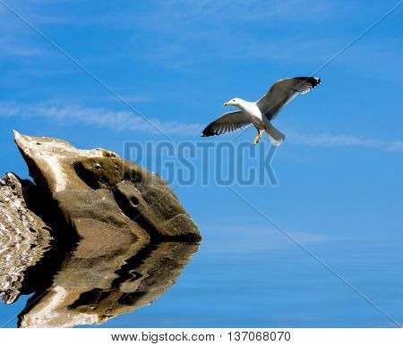 seagull fly to stone in water