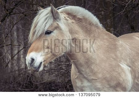 Closeup portrait of a wild horse side profile.
