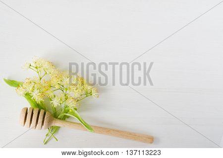 Fresh linden flowers on a white wooden background. Folk, alternative, complementary medicine, traditional medicine.