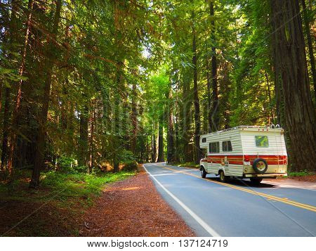Driving through Lush, Green, Giant Redwood Forest