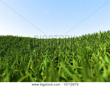 green grass meadow in spring