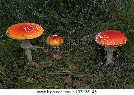 three toadstools in the  grass in the forest