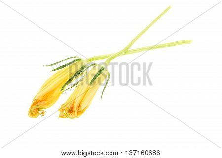 Yellow Squash Blossoms, Isolated On White Background.