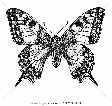 It is a butterfly, what made by ink, then it was digitalized.
