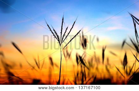 the focus is a tropical plant and the background a summer sunset on a yucatan peninsula beach
