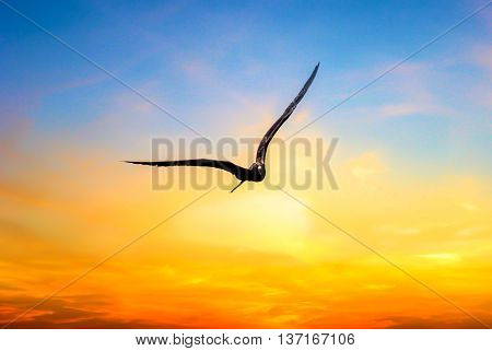 A bird flying over on a Summer sunset at a yucatan peninsula beach