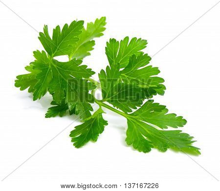Parsley or garden parsley is a species of Petroselinum in the family Apiaceae native to the central Mediterranean