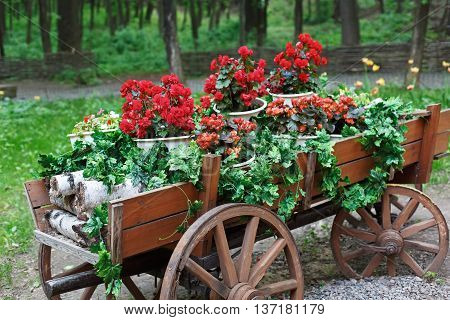 The cart with flowers. Scarlet red geranium flowerbed in retro styled old wooden wagon with birch firewood. Cranesbill in park landscape design, modern landscaping