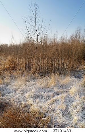 frozen straw on wilderness at the sunny winter morning