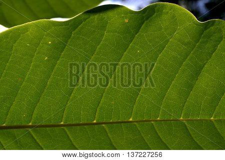 piece of green leaf in the garden