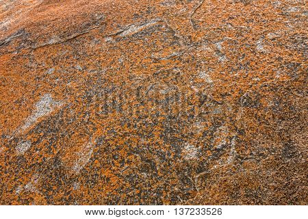 Texture of Golden yellow orange Lichen on rocks at Remarkable Rocks, natural rock formation at Flinders Chase National Park. One of Kangaroo Island's iconic landmarks, South Australia