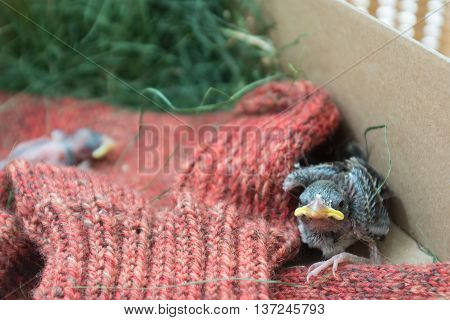 newly hatched sparrow fallen from the nest need help