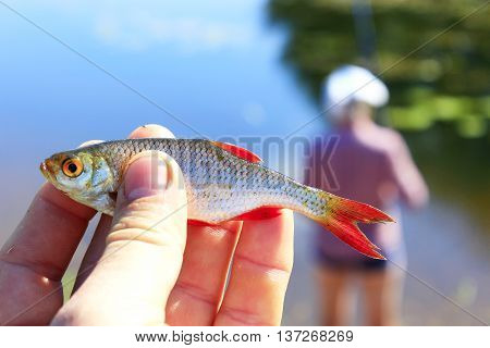 rudd caught in hand and fisherman at the river in the background