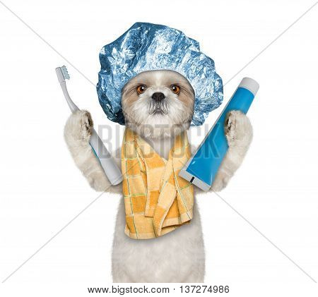 dog is going to clean the teeth after shower -- isolate on white