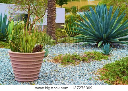 Drought tolerant plants in pots and amongst rocks taken in a residential yard
