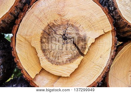 Close-up of a cross section of a tree stump showing aging circles