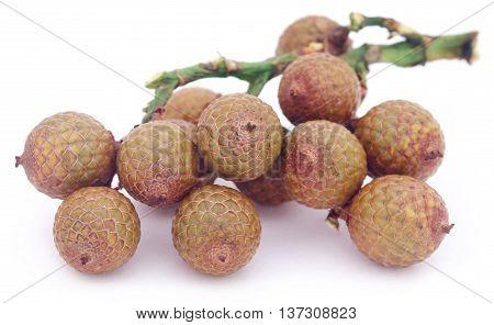 Tropical Calamus palm fruits over white background