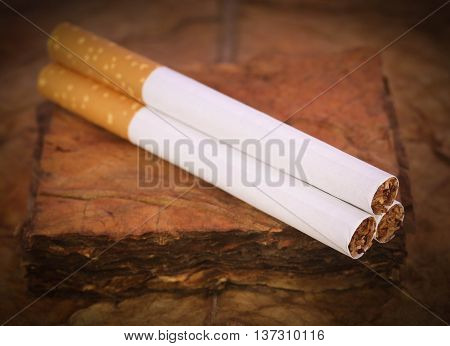 Close up cigarette with dry tobacco leaves