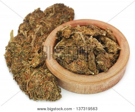 Medicinal cannabis used as legal drugs in many countries