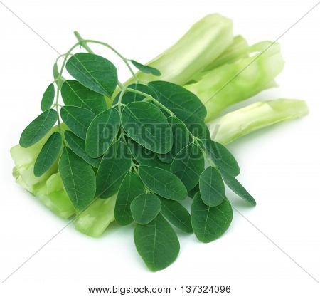 Medicinal moringa with green leaves over white background