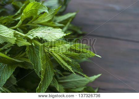 Bunch Of Fresh Green Mint