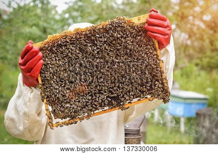 Honeycomb with bees and honey beekeeper beekeeping