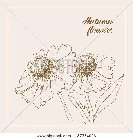 Monochrome drawing herb flower echinacea. Style line art. Vector illustration. Invitation card