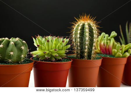 Different succulents and cactus in pots on black background