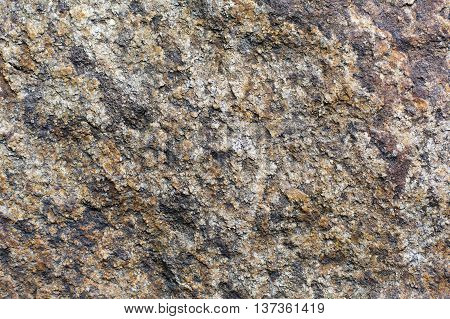 Natural tree bark texture. Untreated weathered rustic wood closeup background, rough plant surface.