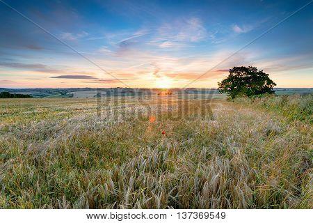 Somsert Countryside