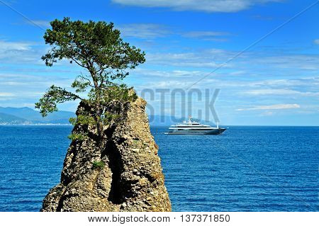 Lonely pine on the rock at mediterranean sea with the ship on background