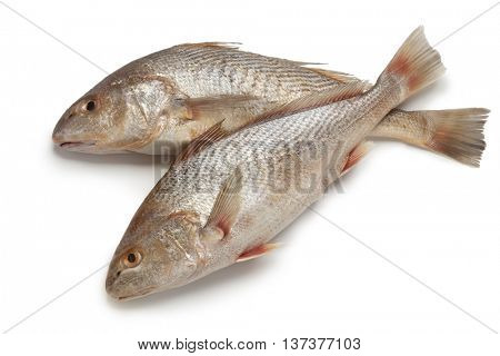 Pair of fresh raw koebi fishes  on white background