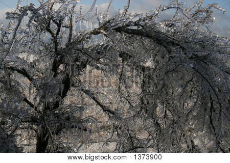 Ice Tree 3