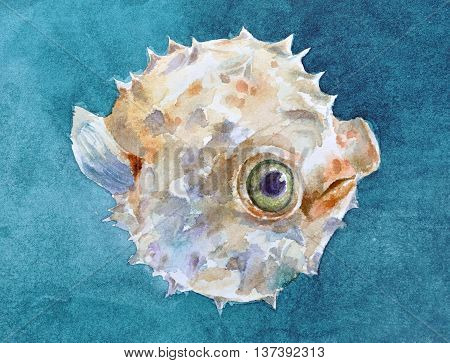 Watercolor handpainted balloonfish with green eyes and blue background