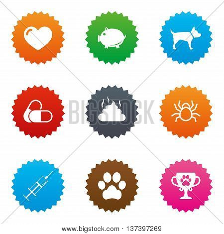 Veterinary, pets icons. Dog paw, syringe and winner cup signs. Pills, heart and feces symbols. Stars label button with flat icons. Vector