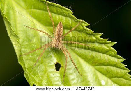 Close up photo of a jumping spider on a leaf
