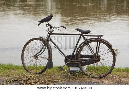 Crow On A Bicycle