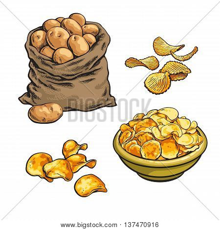 fried potato chips and fresh, sketch hand-drawn illustration isolated on white background set with potatoes, various fried potato chips, chips in a bag in a bowl