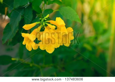 Morning sun through two beautiful yellow flowers.