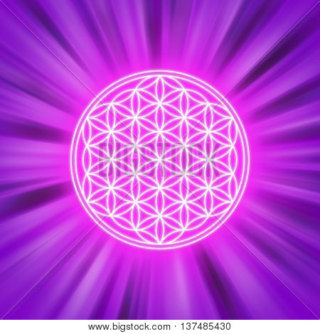 Bright Flower of Life on pink light rays. Spiritual symbol and Sacred Geometry since ancient times. Illustration.