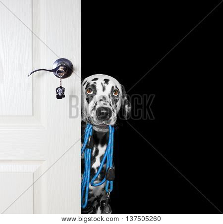 Dog with a leash peeks out from behind the door -- isolated on black