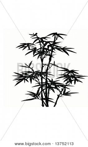 Bamboo vector isolated on white