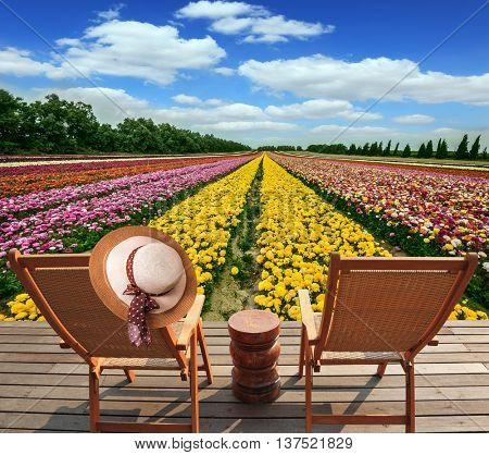 The huge field of flowers in the kibbutz on border with Gaza Strip. Two convenient chaise lounges stand on a roadside on wooden scaffold. The elegant women's hat hangs on one of them