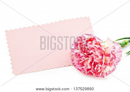Blank beautiful pink card ready for your text or message with carnation flower isolated on white background.