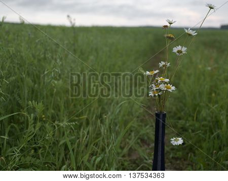 A bottleneck with a bunch of wild flowers cropped outdoor shot with shallow depth of field