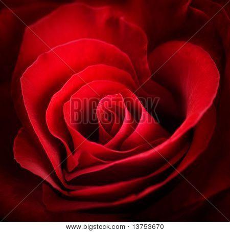 Valentine Red Heart Rose