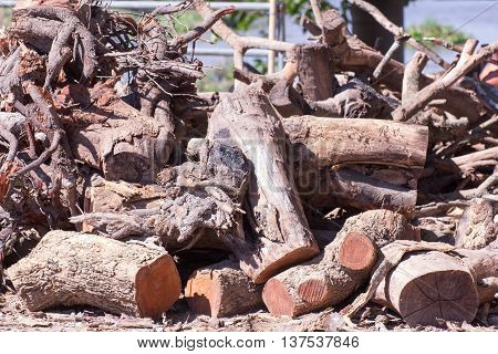 firewood , life style in Thailand asia