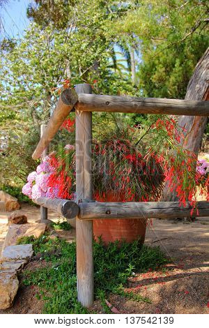 wooden fence made of round wood, orange clay pots with flowers stand side by side, one plant with soft red flowers on the tips, back with pink hydrangea